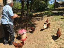 jimwith chickens